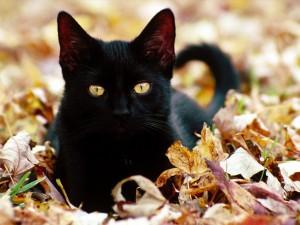 černá magická kočička naturistická masáž porno